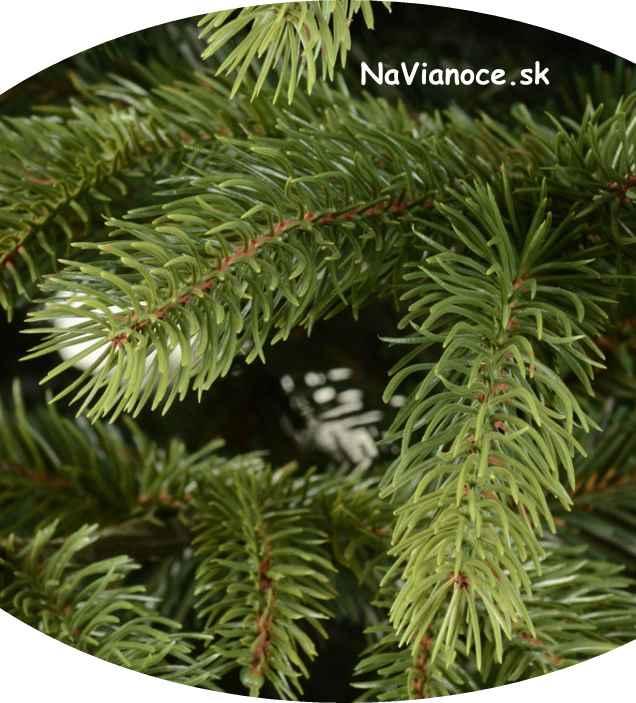 vianočné ihličie na Vianoce